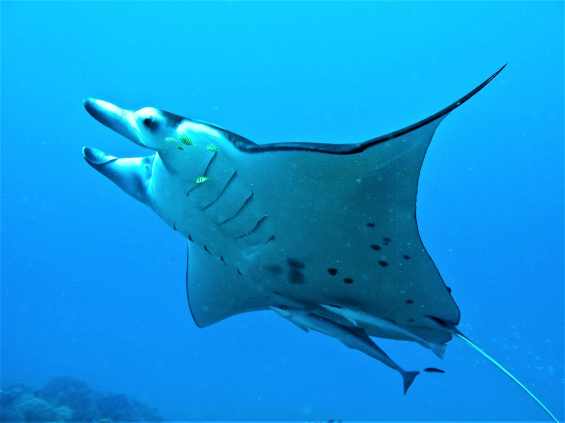 https://tahititourisme.fr/wp-content/uploads/2017/08/Bora-Bora-Reef-Discovery-3.jpg