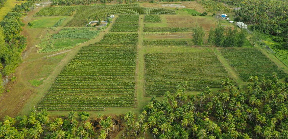 https://tahititourisme.fr/wp-content/uploads/2017/08/Vin-de-Tahiti_1140x550-min.png