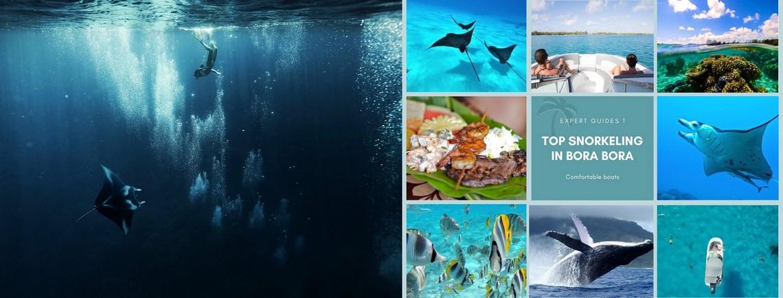 https://tahititourisme.fr/wp-content/uploads/2017/08/reef-discovery-bora-bora.jpg