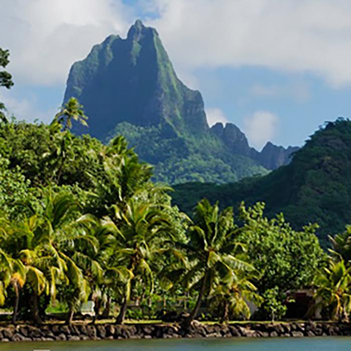 Robinsonnade Polynésienne