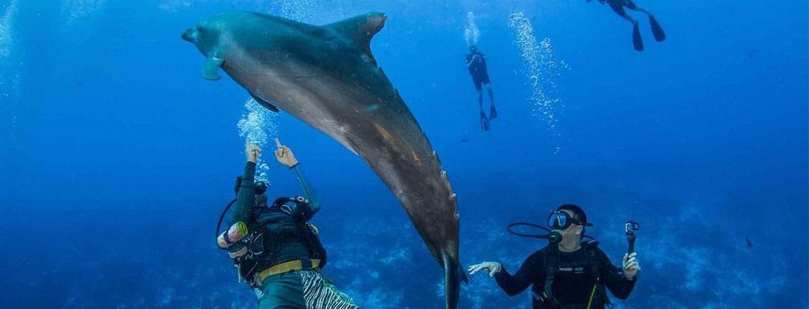 https://tahititourisme.fr/wp-content/uploads/2017/10/Rangiroa-Diving-Center-1150x440px.jpg