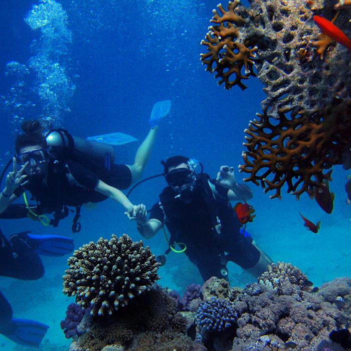 Combiné 5 îles : Archipel de la Socièté et Plongée Aux Tuamotu