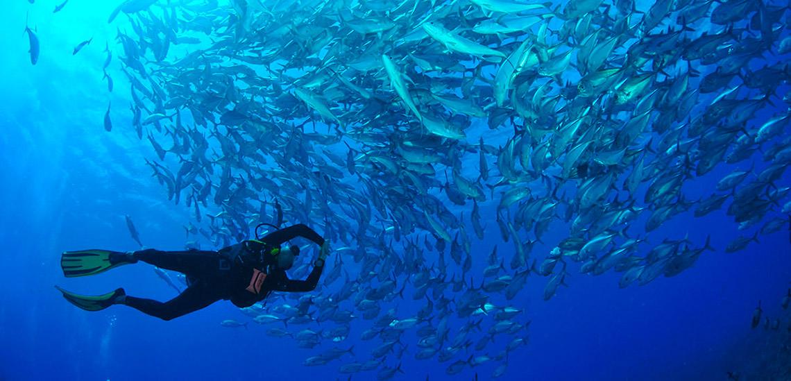 https://tahititourisme.fr/wp-content/uploads/2018/04/4-polynesie-archipels-tuamotu-soeciete-plongee-Tikehau-Plongee-banc-carangues.jpg