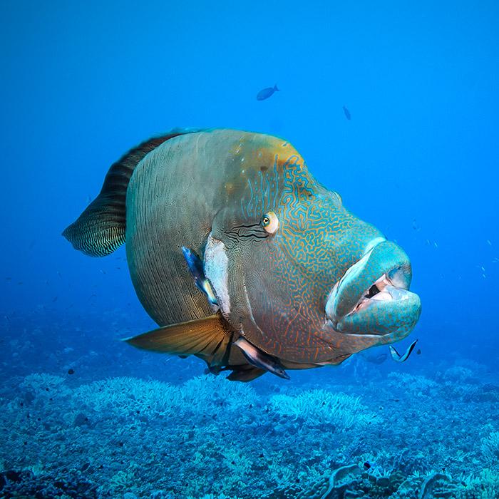 Maeva : Séjour plongée combiné de la Société aux Tuamotu