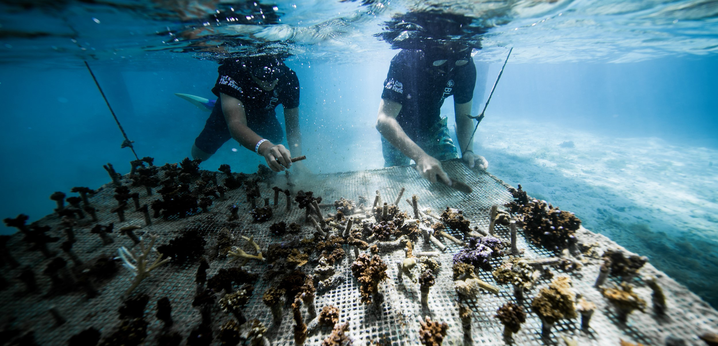https://tahititourisme.fr/wp-content/uploads/2018/11/CoralGardeners-couv.jpg