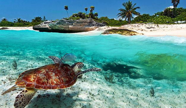 Combiné 4 îles : Tahiti,Tikehau, Rangiroa, Fakarava