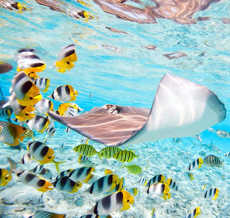 Authentique Polynésie en pension de famille avec Austral Lagons
