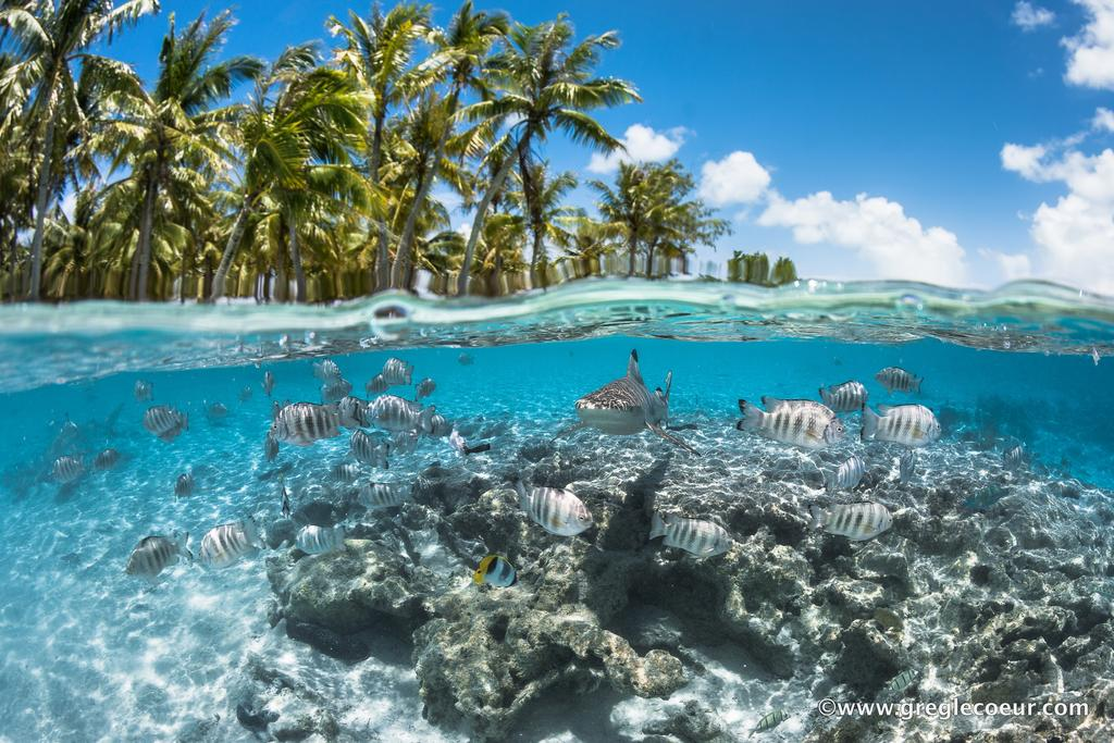 https://tahititourisme.fr/wp-content/uploads/2019/03/Poissondanslelagonde_preview.jpg