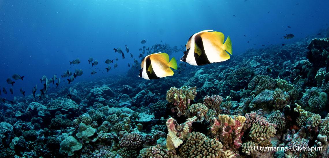 https://tahititourisme.fr/wp-content/uploads/2019/05/polynesie_plongee_fakarava_img_4032_dive_spirit.jpg