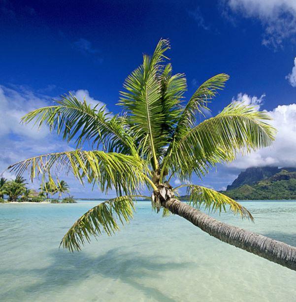 Tahiti 3 Iles à petit prix