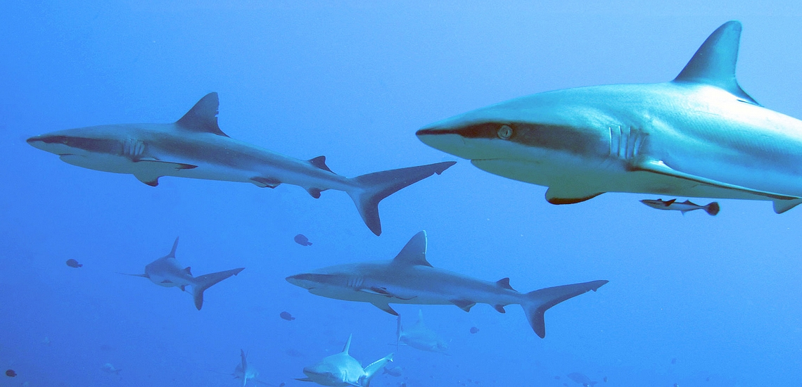 https://tahititourisme.fr/wp-content/uploads/2020/01/Fakarava-plongée-requin-avec-enata-6.jpg