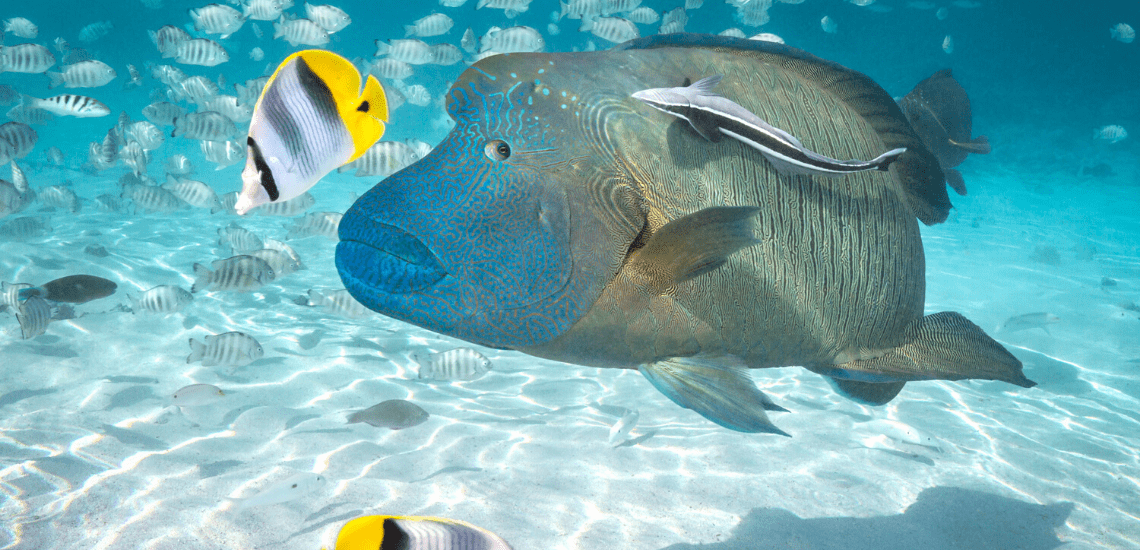 https://tahititourisme.fr/wp-content/uploads/2020/02/SnorkelingExpeditions2_1140x550-min.png