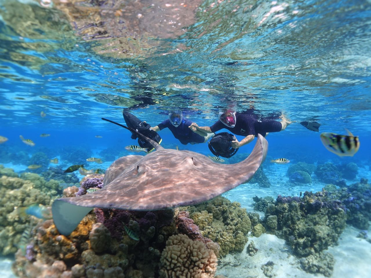 https://tahititourisme.fr/wp-content/uploads/2020/09/Sea-Scooter-Snorkeling-Tour-à-moorea-copie-2.jpg