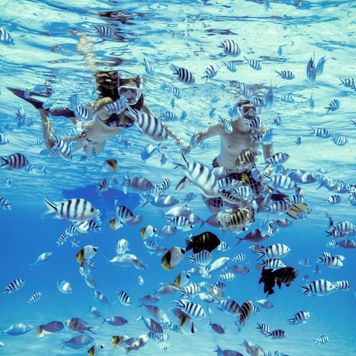 Maeva : Snorkeling et découverte des îles et lagons polynésiens