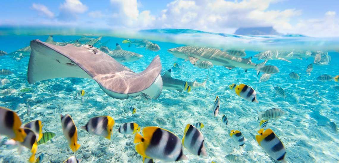 https://tahititourisme.fr/wp-content/uploads/2020/10/polynesie_plongee_bora_bora_pastenague-et-requin-pointes-noires_shutterstock_blueorange_studio_113913454.jpg