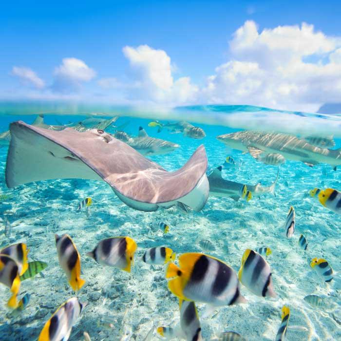 Hauts sommets et atolls de rêve : Tahiti, Moorea, Bora Bora, Rangiroa