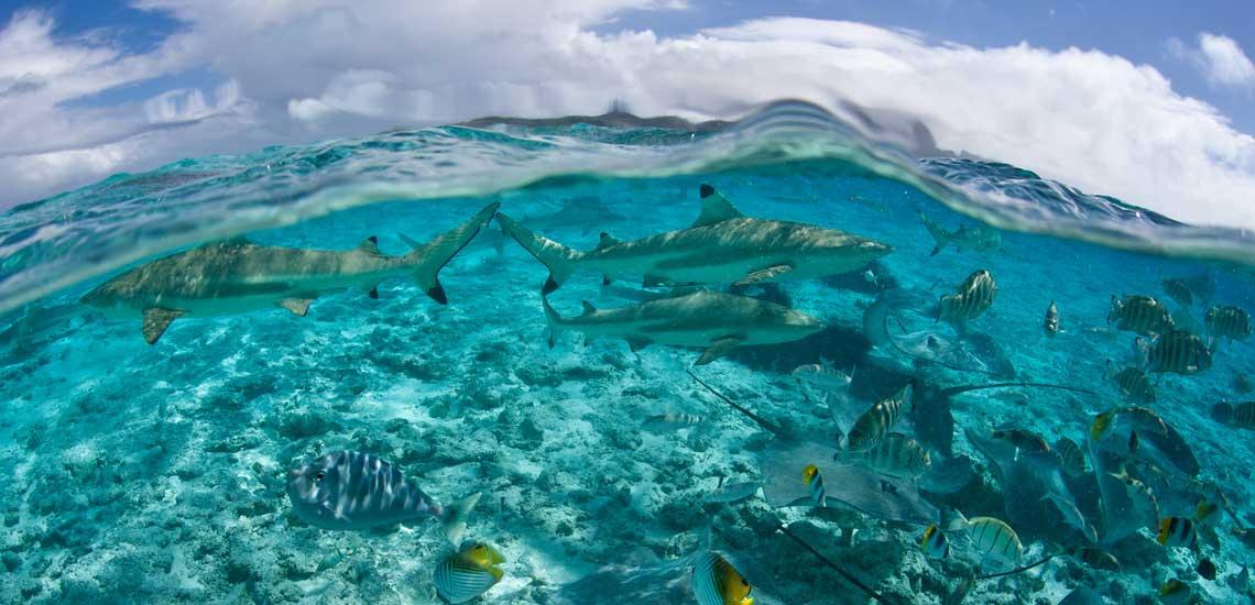 https://tahititourisme.fr/wp-content/uploads/2020/10/polynesie_plongee_bora_bora_raie_requin_shutterstock_ethan_daniels_129224270.jpg
