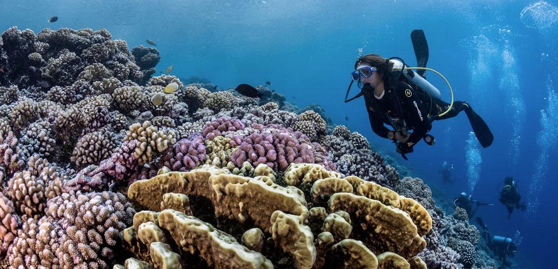 https://tahititourisme.fr/wp-content/uploads/2020/10/polynesie_plongee_top_dive_dsc_4832_greglecoeur.jpg