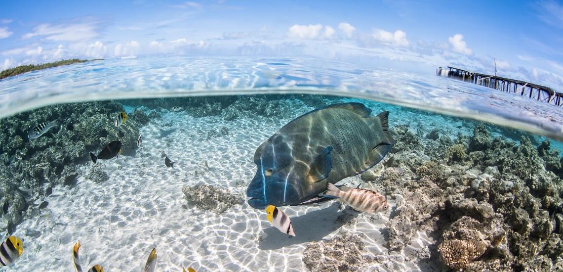 https://tahititourisme.fr/wp-content/uploads/2020/10/polynesie_plongee_top_dive_dsc_5186_greglecoeur.jpg