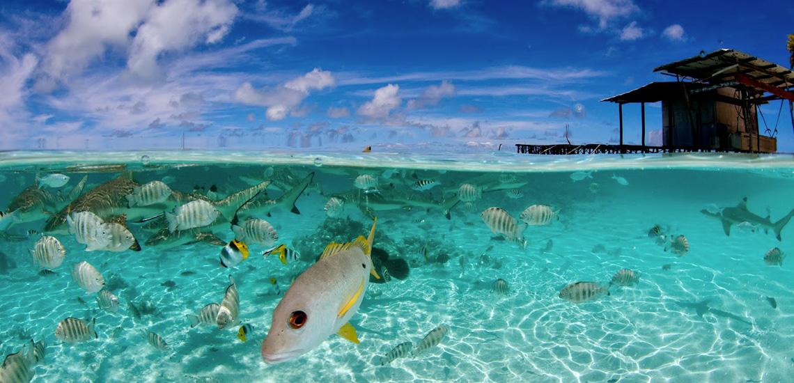 https://tahititourisme.fr/wp-content/uploads/2020/10/polynesie_plongee_top_dive_faka_sud_piscine_3_frederique_legrand-1.jpg