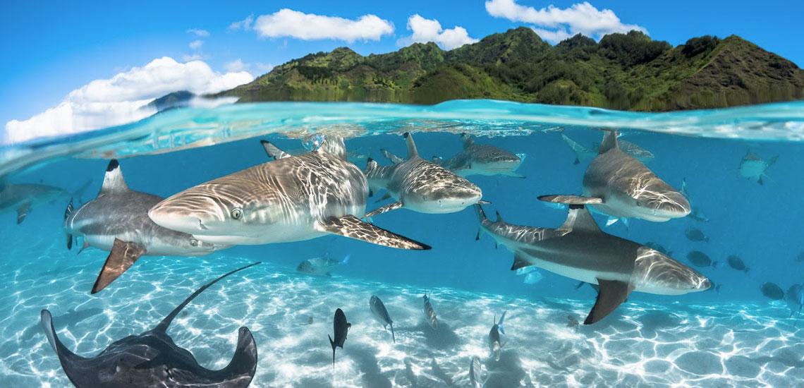 https://tahititourisme.fr/wp-content/uploads/2020/10/polynesie_plongee_top_dive_moorea_greglecoeur.jpg