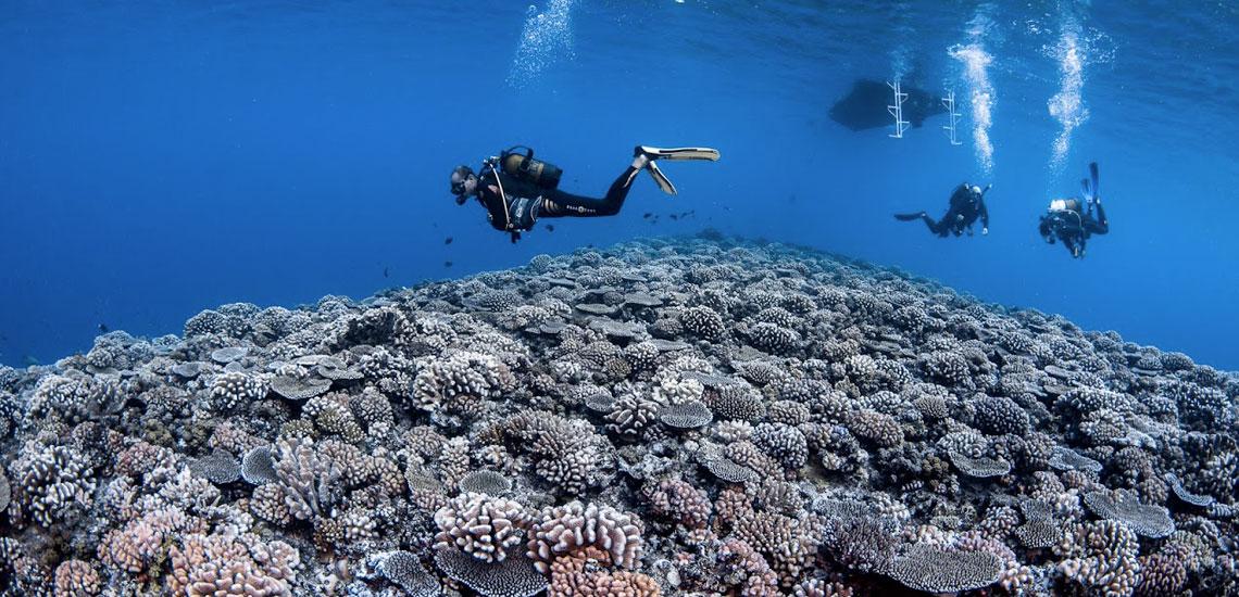 https://tahititourisme.fr/wp-content/uploads/2020/10/polynesie_plongee_top_dive_polynesie_corail_dsc_0686_greglecoeur.jpg