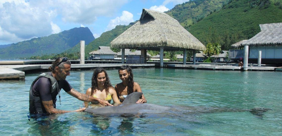 https://tahititourisme.fr/wp-content/uploads/2021/01/Offre_Moorea-Dolphin-Center.jpg