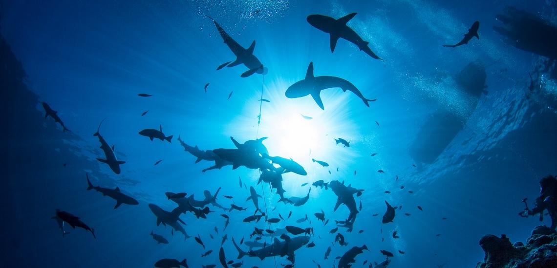 https://tahititourisme.fr/wp-content/uploads/2021/03/spots-devasion-croisiere-plongee-requins.jpg