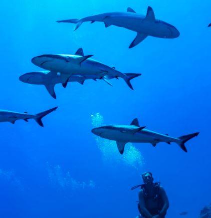 Un programme 100% atolls