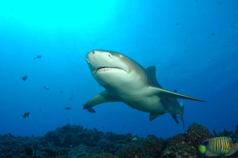 Séjour spécial Requins – Tikehau, Rangiroa, Fakarava