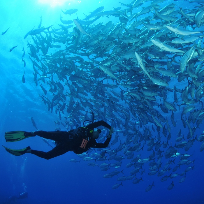 Séjour plongée 3 atolls aux Tuamotu