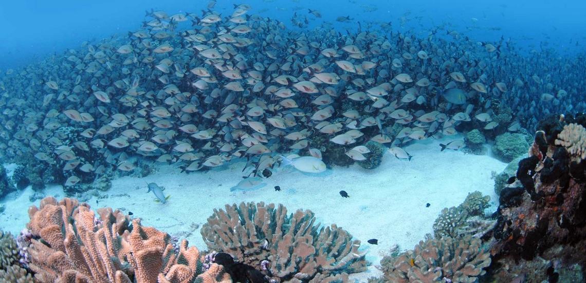https://tahititourisme.fr/wp-content/uploads/2021/07/Spots-dEvasion-Polynesie-Tuamotu-enata-plongee.jpg