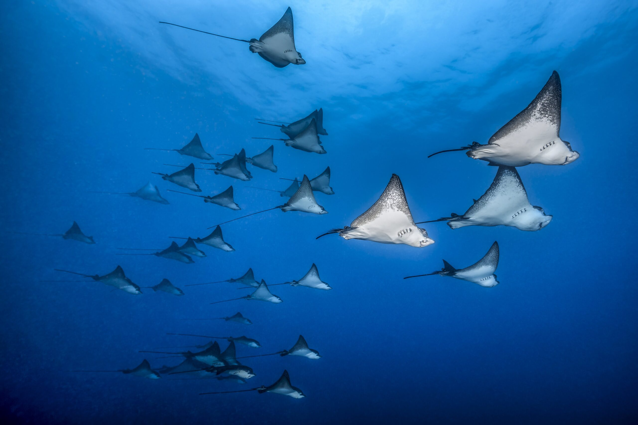 https://tahititourisme.fr/wp-content/uploads/2021/07/topdive-mai-2018-BELOW_SURFACE_TOBIAS_FRIEDRICH__53I9437__1-scaled.jpg