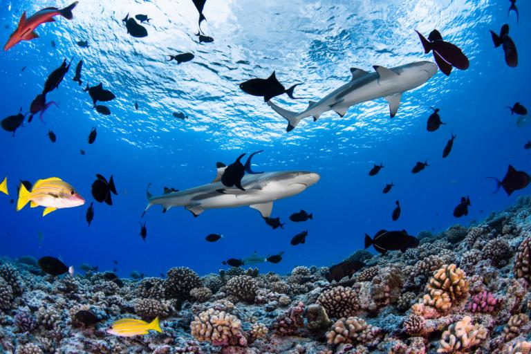 Immersion aquatique de Bora Bora aux Tuamotu – 10 plongées/personne incluses