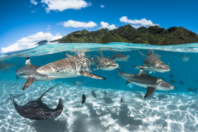 Au coeur des Tuamotu – 10 plongées / personne incluses